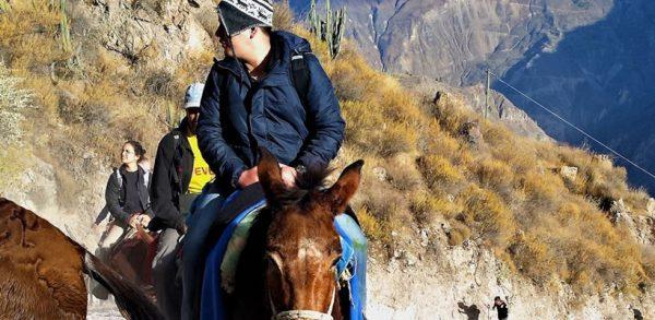 Paquete fiestas patrias Arequipa y el Cañón del Colca <span>(3D/2N)</span>