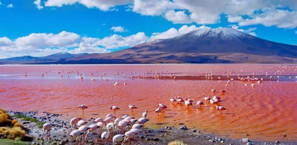 Paquete por fiestas patrias en Salar de Uyuni <span>(5D/4N)</span>